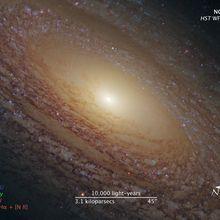 La fioccosa galassia a spirale NGC 2841