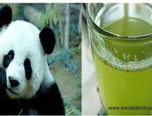 Ya se vende Te Verde con excremento de Oso Panda
