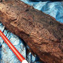Découverte d'une sculpture en bois vieille de 6000 ans
