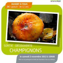 2 Nov : sortie champignons à Chambiers