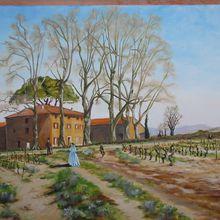 Cuers (Var) - Le vignoble Château la Moutête