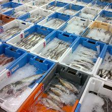 Entre le filet et l'assiette de poisson, le rôle du mareyeur