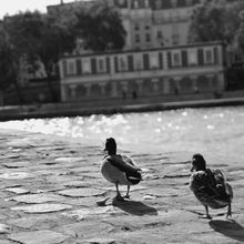 Mes Petits Canards...