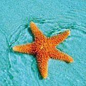 Etoiles de mer