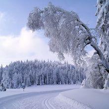 paysage de neige, dans les Vosges