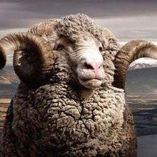 Test Brubeck Extreme Wool
