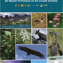 Le livret Faune et Flore de Haute Provence et du Haut Verdon  à disposition des habitants !