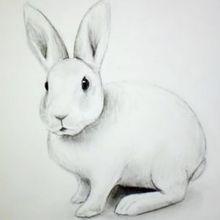 Apprenez à dessiner un lapin blanc, étape par étape
