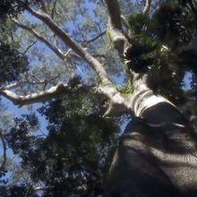 Voyage en forêt des pluies #9: la croissance des plantes