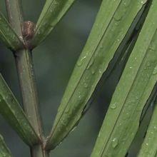 Voyage en forêt des pluies #13: Forêt tropicale et forêt tempérée