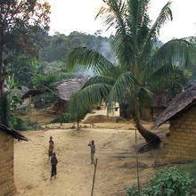 RdCongo : Des forêts en sursis !