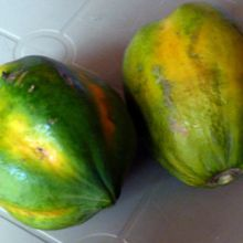 Les papayes et papayers de la commune de #Kintambo #1