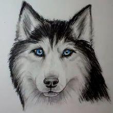 Comment dessiner un chien : Husky
