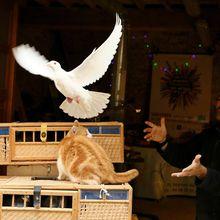 Une colombe pour la liberté