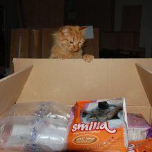 Une livraison pour mes chats