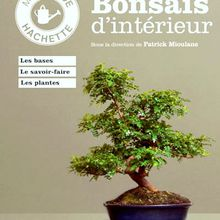 """Mini guide Hachette """"Bonsaïs d'intérieur"""" (Patrick Mioulane - Jochen Pfisterer)"""