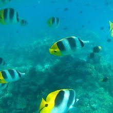 Album - La vie sous marine à Bora Bora