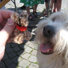 Patrick, créateur de chiens à Montmartre