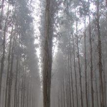 J.58 Albergaria - SÃO João de Madeira : 32 km
