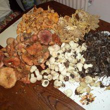 8 Kg de champignons !