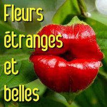 Fleurs étranges, insolites, inquiétantes et belles...