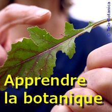 MOOC Tela Botanica - Apprendre la botanique
