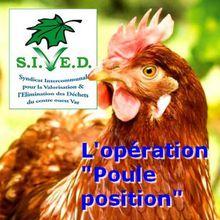 Local Var : poules + déchets = oeufs + réduction du coût de traitement - Opération Poule Position