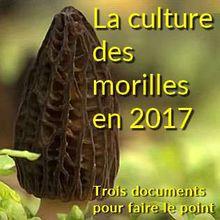 LA CULTURE DES MORILLES EN 2017 - Trois documents pour faire le point