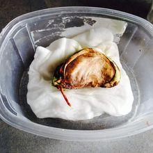 Faire germer un noyau de mangue, essai 2016