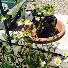 Laisser le temps passer et laisser faire la vie végétative