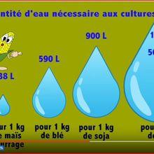 Encore une baliverne : « La culture du maïs est grande consommatrice d'eau »