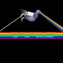 Pigeon prismatique et arc-en-ciel vomitif.