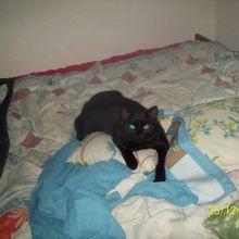Ma rencontre avec Benny et Bibo ,mes 2 chats noirs