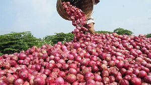 Oignon : le Burkina est 2ème exportateur en Afrique de l'Ouest après le Niger