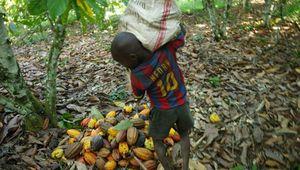Côte d'Ivoire: un nouveau rapport souligne des efforts pour s'attaquer au travail des enfants dans la chaîne d'approvisionnement du cacao