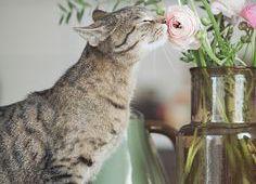 Gatos que inspiran ¿te gustan los gatos?