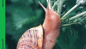 Mémento de l'éleveur d'escargots