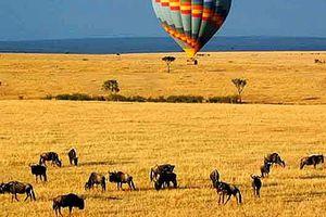 Kenya, safari per tutti i gusti
