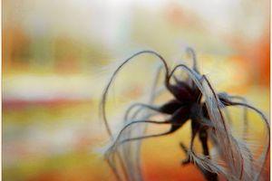 étrange araignée