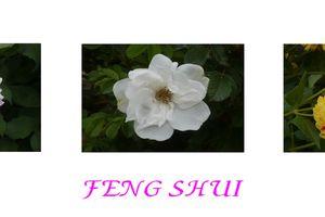 feng shui rennes cr ez l 39 harmonie dans votre vie avec