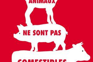 Les animaux ne sont pas comestibles, de Martin Page, éditions Robert Laffont