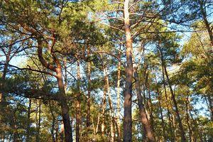Balade en forêt de Fontainebleau (suite)