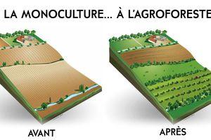 Des vignes et des arbres, l'agroforesterie se réinvente, un projet intéressant.