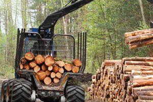 Bois énergies, la biomasse est demandée de tout côté, y'en aura pas pour tout le monde !
