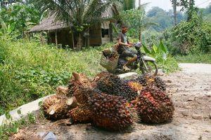 Ne plus soutenir les projets d'huile de palme c'est aussi soutenir les communautés villageoises.