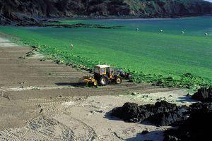 La Bretagne des algues vertes, celle qu'on ne veut plus voir et encore moins sentir, aura-t-elle raison de ce fléau?