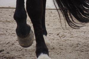 Le cheval qui « marche sur des œufs »