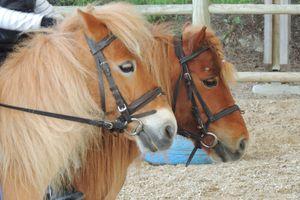 Estimer la toxicité des minéraux chez le cheval