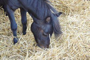 Calcul de la ration d'un cheval : contrôler les résultats