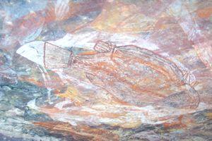 Peintures aborigenes:  les tortues